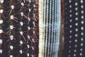 iseeyouphoto kew cacti 5
