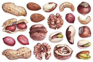 Watercolour illustrations of nuts