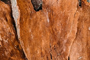 Background texture of old wood. Texture of bark wood use as natural background