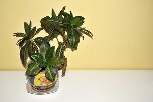_DSC3353.decorative pots