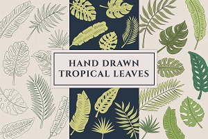 Hand Drawn Tropical Leaves