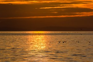 Sunset and waterfowl on Semiahmoo Bay