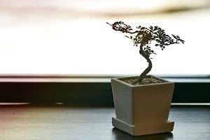 A small tree in a pot