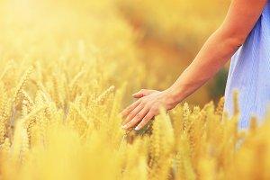 Woman hand touching golden wheat