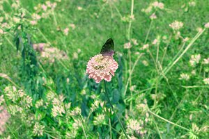 Flower and buterfly