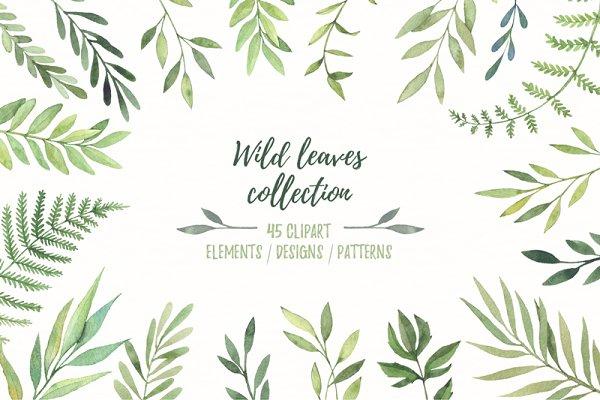 Wild leaves clip art. Watercolor se…