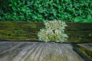Lichen On Wood Fence