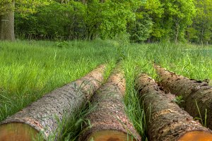 Logs In The Forest In Lower Saxony