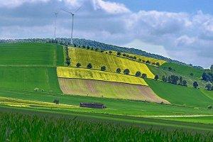 Yellow Fields in Lower Saxony