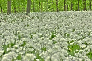 Germany: Forest In Lower Saxony