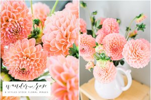 Dahlia Floral Styled Stock Images
