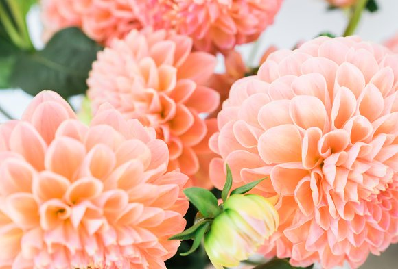 Dahlia Floral Styled Stock Images in Instagram Templates - product preview 3