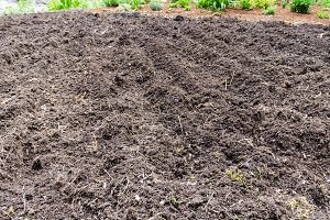 Vegetable garden plowed for planting
