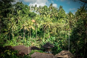 Green jungle on Bali island, Indonesia. Tropical rainforest scene.