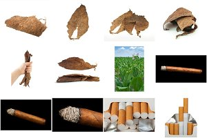 Dried tobacco leaves and cigars
