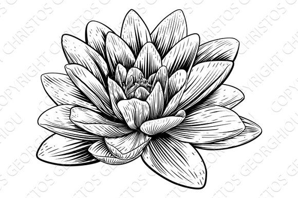 Lotus Flower Water Lily Vintage Woodcut Etching