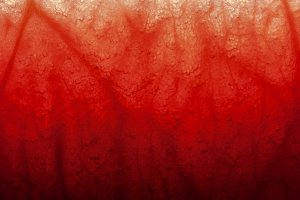 The veins of the pulp of watermelon