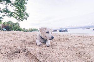 Street dog playing on the beach of Nusa Lembongan island, Bali, Indonesia.