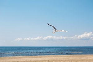 Seagull flying near the sea
