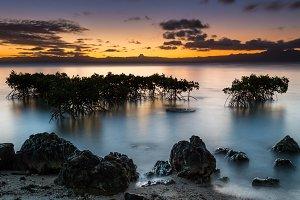 Mangroves in the Moonlight