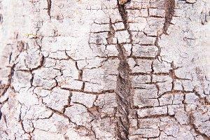 Texture surface bark wood