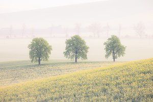 Spring field in Southern Moravia