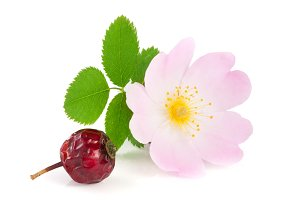 Rosehip flower and berry with leaf isolated on white background