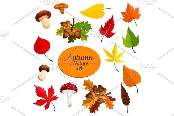 Autumn Falling Leaf Forest Mushrooms Vector Set