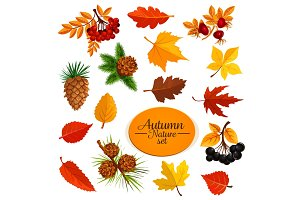 Autumn vector icons of leaf fall or forest berry