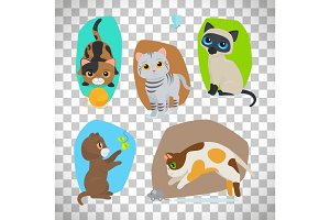 Cute cats set on transparent background