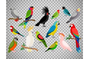 Tropical parrot set on transparent background