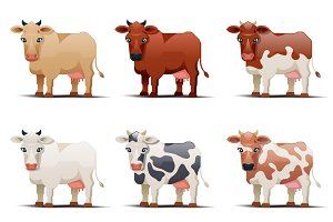 Cows of different colors