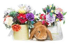 Beautiful domestic rabbit