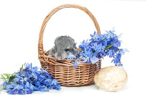 Chinchilla in basket