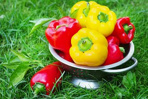 Fresh red and yellow peppers in the street in the garden on the grass