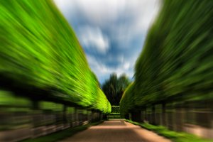 Green idyllic tree alley park motion abstract