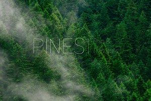 Pines Thin & Pines Thin Italic