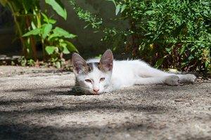kitten outdoor in backyard