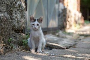 kittens outdoor in backyard