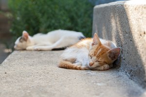 kittens sleeping outdoor in backyard
