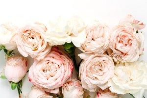 Pale beige roses