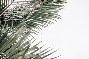 Close up of tropical palm leaves