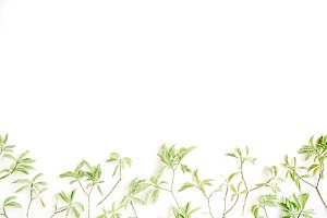 Fresh leaves background