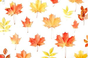 Fall background with maple leaf