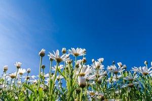 Flowers grass under blue sky