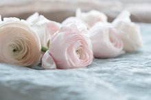 pale pink and white ranunculus