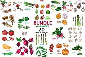 20 vectors vegetables bundle 1