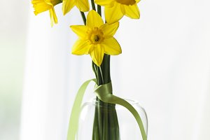 Daffodils in natural light