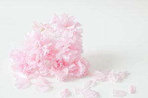 Pink Flower, Petals -Styled Photo