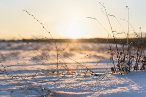 dry grass and winter sunset